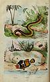 Dictionnaire pittoresque d'histoire naturelle et des phénomènes de la nature (Plate 15) (6194574047).jpg