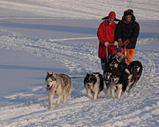 Dog sled team and riders