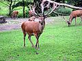 Dortmund-Zoo-IMG 5513-a.jpg