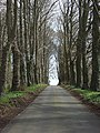 Driveway, Barton Lodge - geograph.org.uk - 370362.jpg