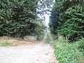 Driveway at Bank - geograph.org.uk - 1510422.jpg