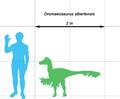 Dromaeosaurus-scale.png