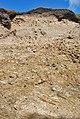 Droskyn Point Soil Profile - geograph.org.uk - 1474417.jpg