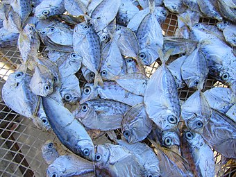 Dry fish of Saint Martins Island.jpg