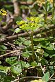 Duben vysenske kopce 25.jpg