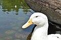 Duck0003.jpg