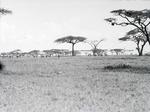 ETH-BIB-Zebras in der Serengeti-Kilimanjaroflug 1929-30-LBS MH02-07-0363.tif