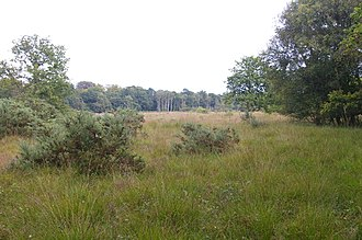 East Winch Common - Image: East Winch Common geograph.org.uk 549715