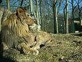 Eberswalde zoo 011.jpg