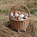 Eggs in basket 2020 G1.jpg