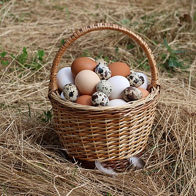 Chicken eggs and quail eggs in a wicker basket