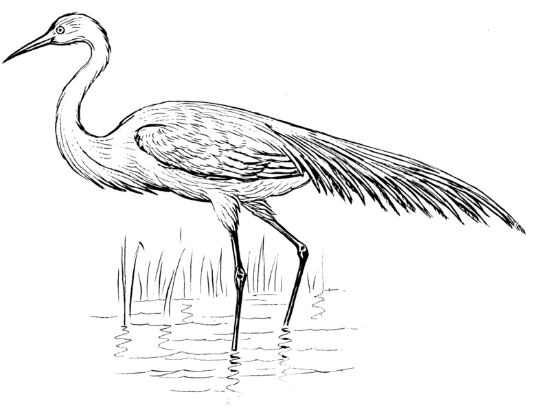 Ficheiro:Egret (PSF).png