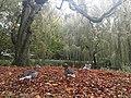 Eimsbütteler Park, Hamburg (40288644952).jpg