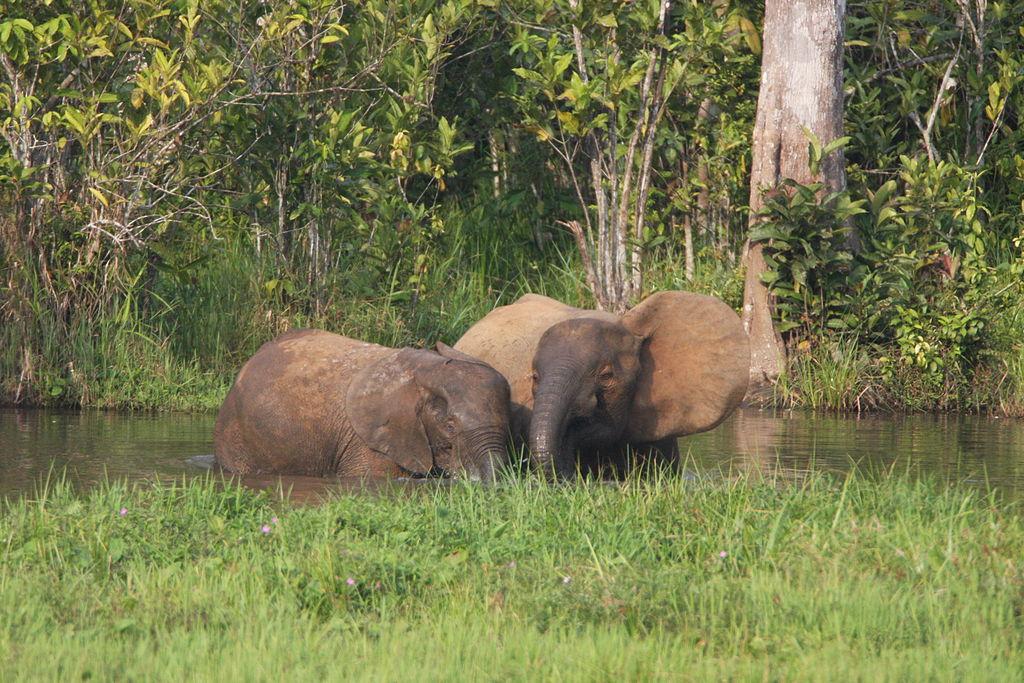 File:Elephant Mother And Calves (6841454314).jpg