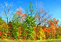 En couleurs - panoramio (1).jpg