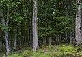En el bosque (45034968772).jpg