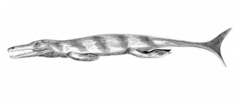 Enaliosuchus BW