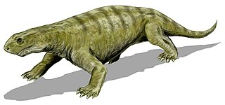 <i>Phreatophasma</i> genus of tetrapods