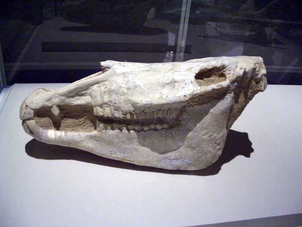 Equus eisenmannae