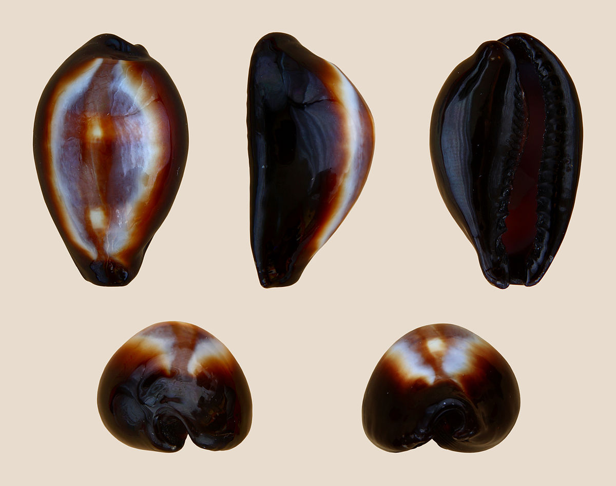Types Of Onyx : Erronea wikipedia