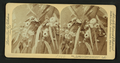 Eucalyptus blossoms and leaves, Cal, from Robert N. Dennis collection of stereoscopic views.png
