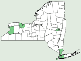 Euonymus americanus NY-dist-map.png