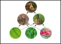 Example trophic web fox partridge rabbit and plants.png