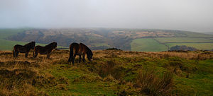 Three small brown horses on grassy area of Exmoor. In the distance are hills.