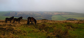 Somerset - The Exmoor landscape with the native Exmoor Pony