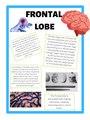 FRONTAL LOBE Poster Psychology.pdf