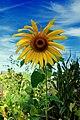 Fading Summer (1) (15240466871).jpg
