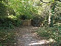 Fallen leaves and a kissing gate on the river side path to Llangoed - geograph.org.uk - 1542657.jpg