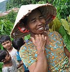 Farmers learn to plant cocoa and increase their profits in rural areas of Vietnam (5071425282).jpg