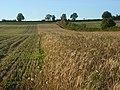 Farmland, Shalbourne - geograph.org.uk - 1014747.jpg