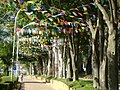 Festa Junina - panoramio.jpg