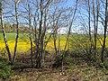 Field near Bedford, PEI (34781656465).jpg