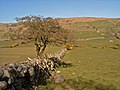 Fields at Legananny - geograph.org.uk - 396500.jpg