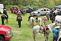 Fiestas Patrias Parade, South Park, Seattle, 2015 - preparing the horses 05 (21526245936).jpg
