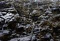 Fiordland N.P. 18.jpg