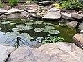 First Water Lily Bud - panoramio.jpg