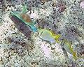 Fish 7 (30695601640).jpg