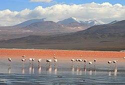 Imagen parcial de las aguas rojas de la Laguna Colorada