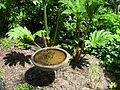 Flickr - brewbooks - Chaotic Water - John M's Garden.jpg