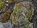 Flickr - brewbooks - Lichen and Plants on a rock.jpg