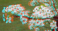 Flickr - jimf0390 - JimF 04-19-10-0011ab tree blossoms.jpg