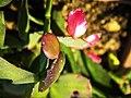 Flor de maio -.jpg