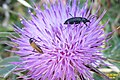 Flora + fauna (MakGi) (34185991464).jpg