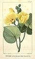 Flore médicale des Antilles, ou, Traité des plantes usuelles (Pl. 148) (8203083238).jpg