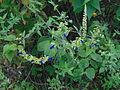 Flores pequeñas azul rey.JPG