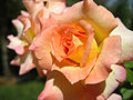 Flower.Mellat Park,Iran.jpg